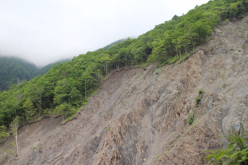 The forest at the Mountain Science Center's Ikawa Forest Station where landslides frequently occur on the steep mountain surface.