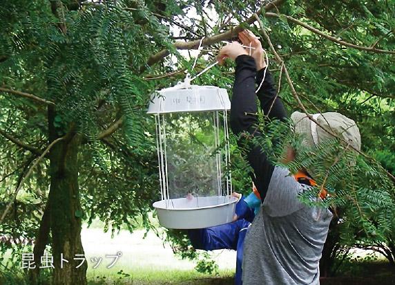 植物見本園と昆虫・菌類01