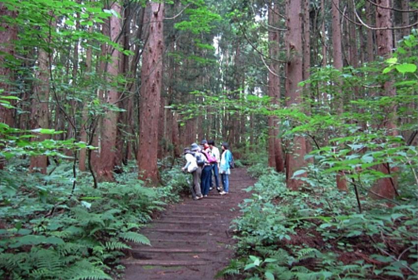 信州信濃町癒しの森の森林セラピーの一コマ 1