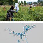 モデル生物生態学実習