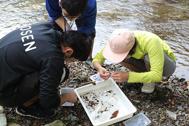 川へ移動しました。川底を網でさらうと、落ち葉などと一緒に水生昆虫が見つかります。