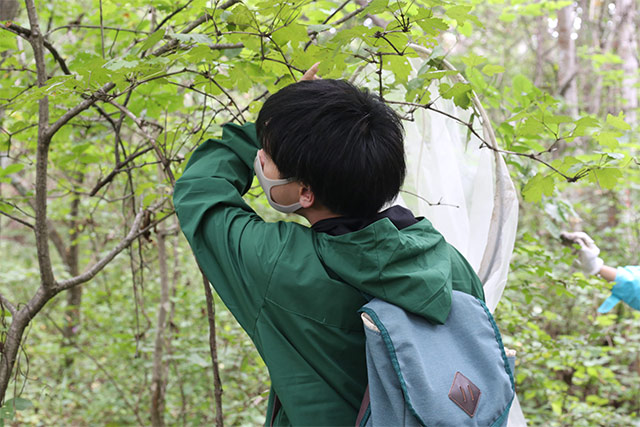 16日の午後は敷地内で。カンボクの葉の裏にはアザミウマ目がよくいますが、例年より実習時期が遅いせいかなかなか見つかりませんでした。