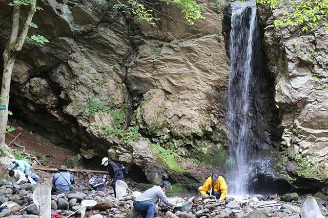 大明神の滝(通常非公開)に到着。滝の音を聞きながら昆虫を探します。