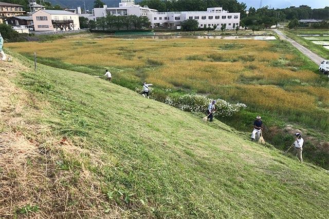 塩吹池で行われている、希少植物に配慮した草刈り