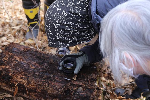 枯れ木が地面に接していた部分では、ムカデやヤスデを見つけました