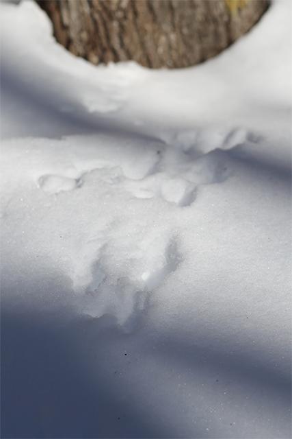 リスの足跡2