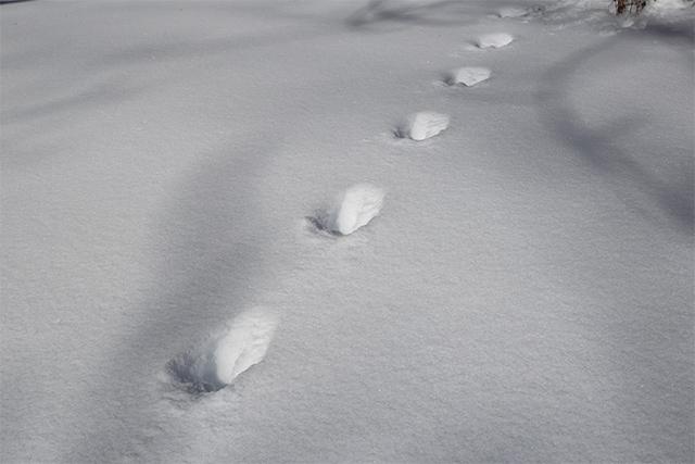 テンの足跡